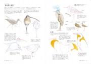 DrawingBird_P048_073.indd